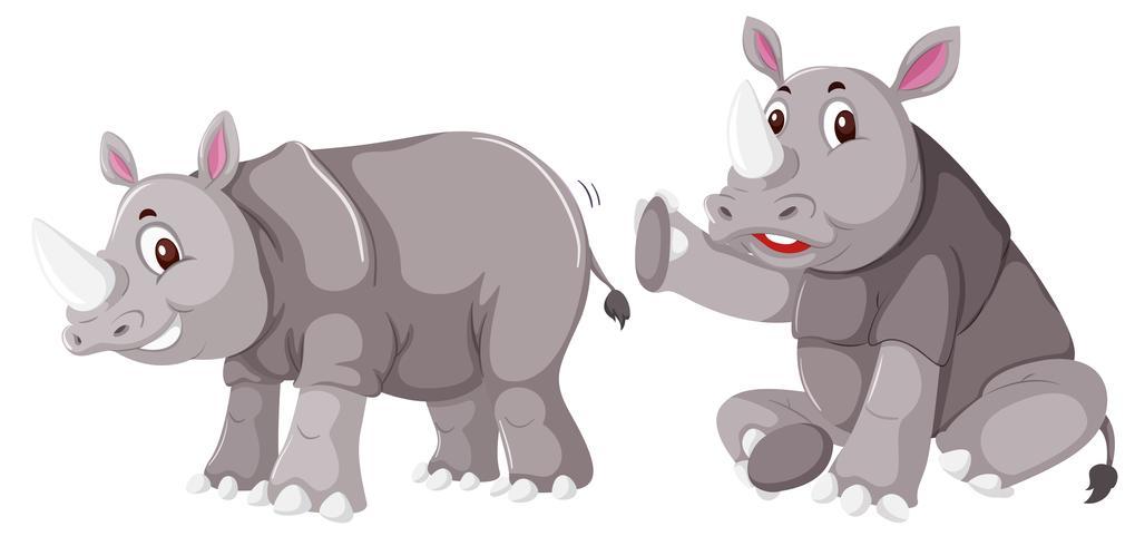 Nashorn auf weißem Hintergrund