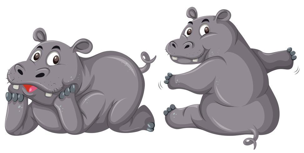 Dos hipopótamos lindos en el fondo blanco