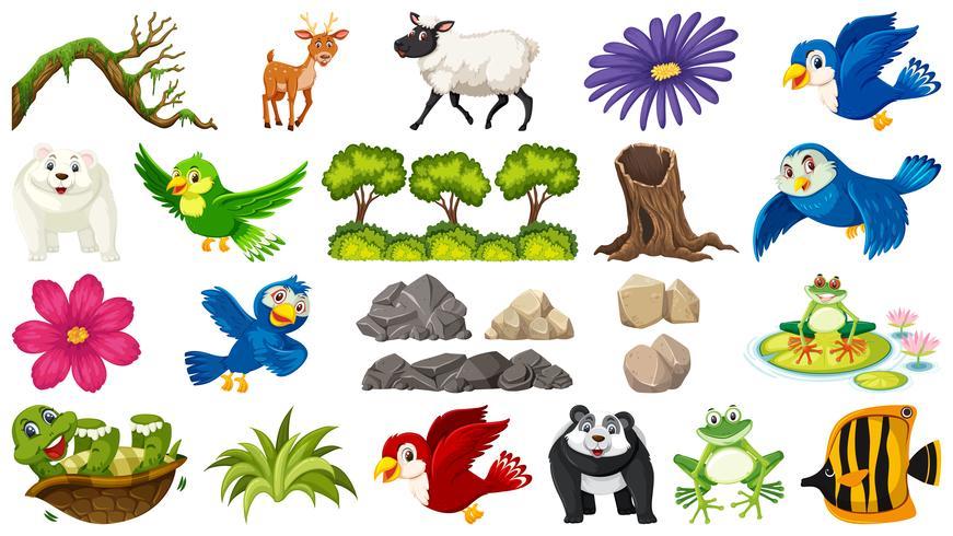 Set av djur och växt