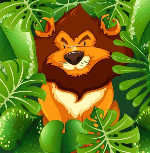 Lion sauvage dans le buisson vert