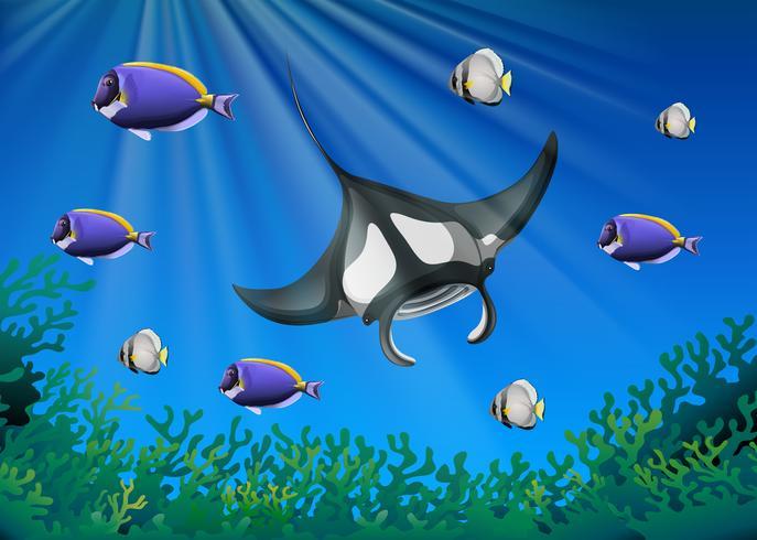 Stingray och många fiskar under havet