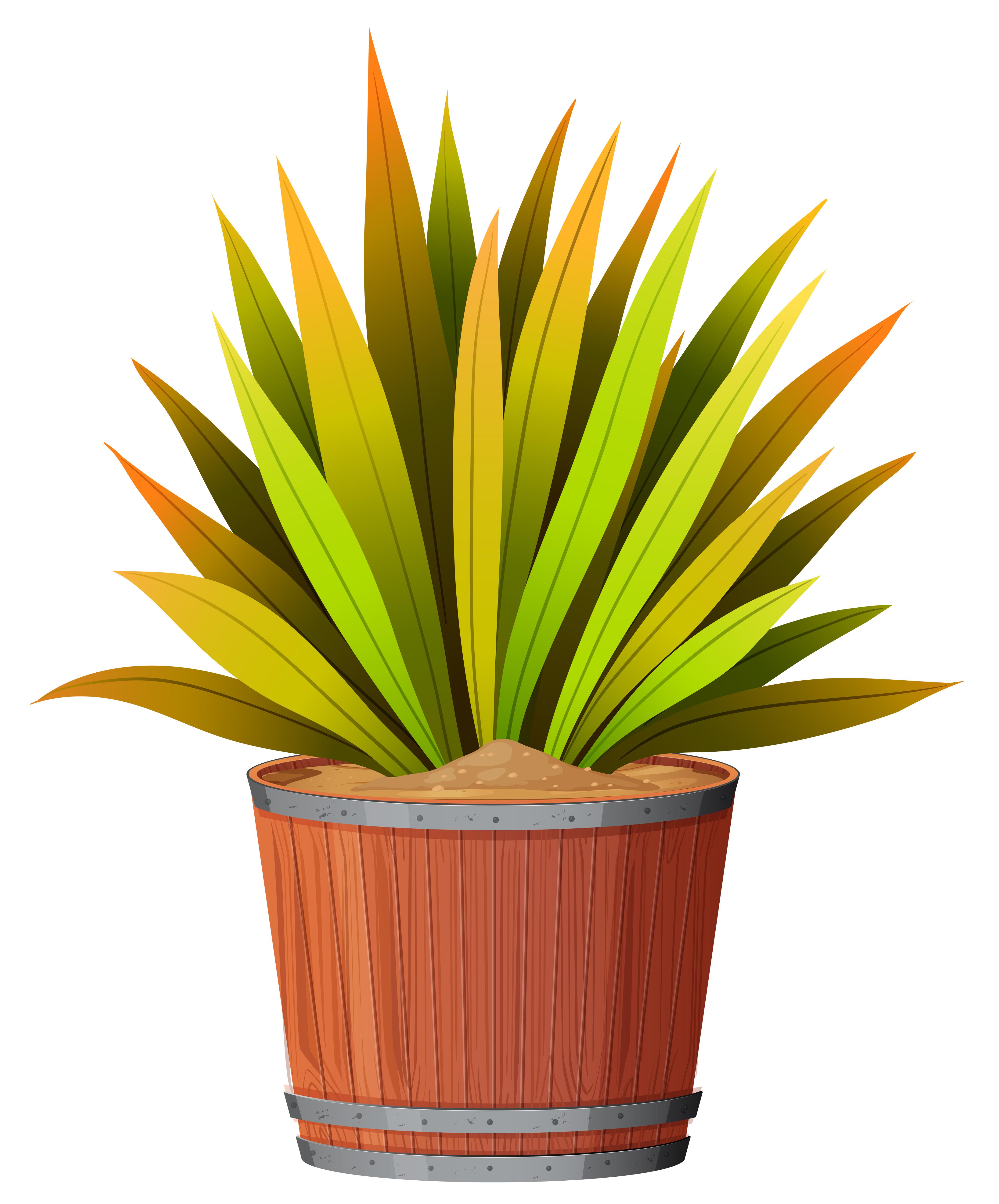 Une plante dans le pot - Telecharger Vectoriel Gratuit ...
