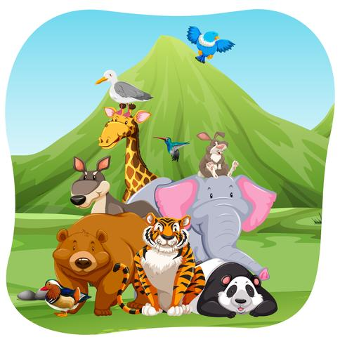 Wild animals in the field vector