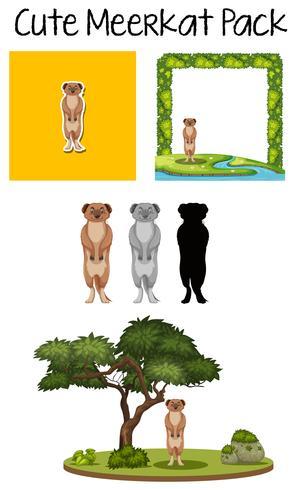 Een pak meerkat