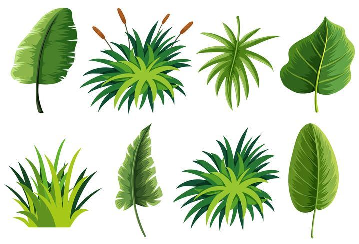 Een set van natuurblad