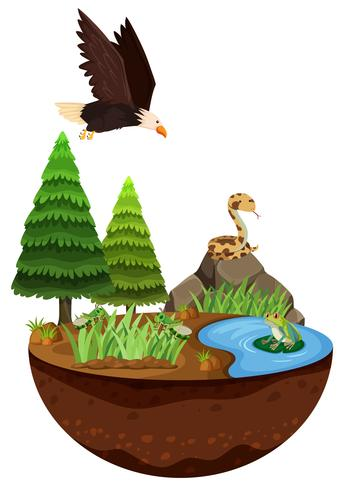 Naturlandschaft und wilde Tiere