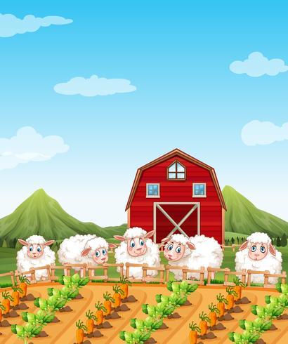 Pecore nei terreni agricoli