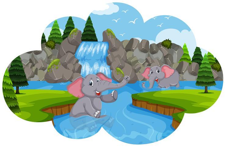 Olifanten die in water spelen