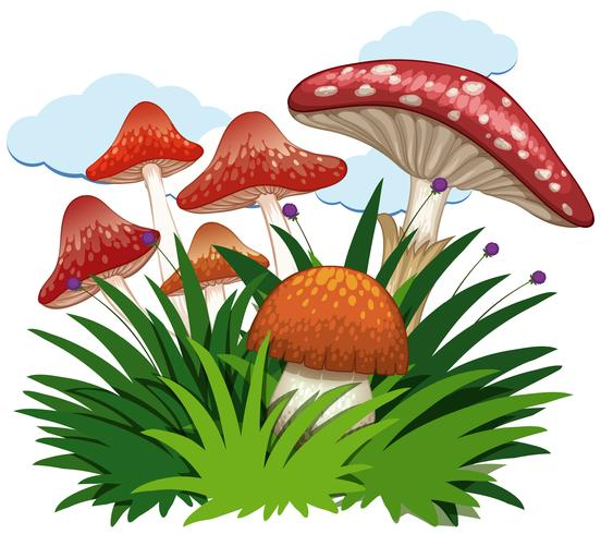 Mushrooms in garden on white background