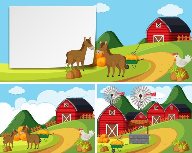 Scènes met paarden op het erf