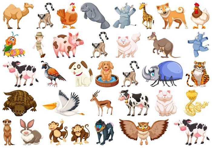 Conjunto de diferentes animales conjunto