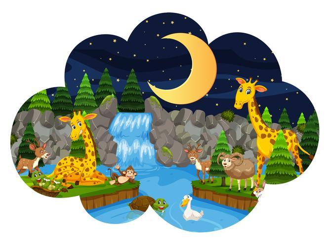 Vilda djur i naturen på natten