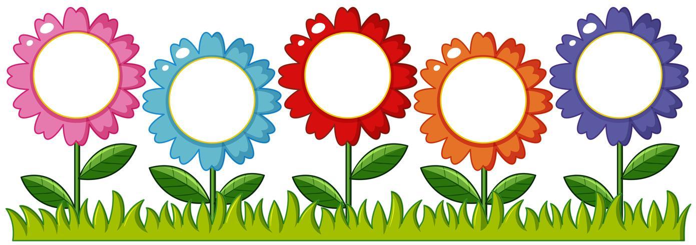 Colorful flowers in garden vector