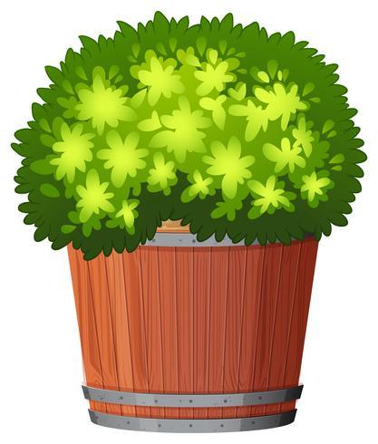 Uma planta no pote