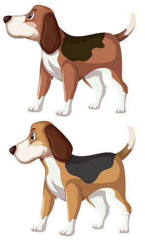 Eine Reihe von Beagle-Hund