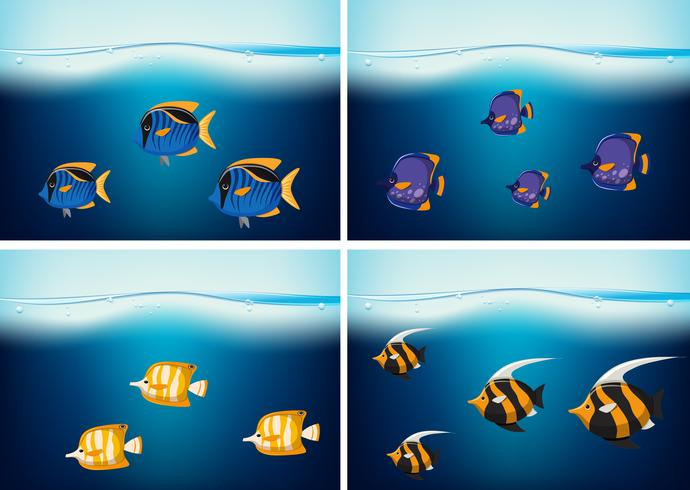 Quattro scene subacquee con diversi tipi di pesci