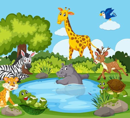 Vilda djur runt en damm