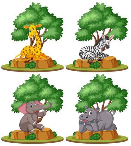 Set di animali selvatici isolato