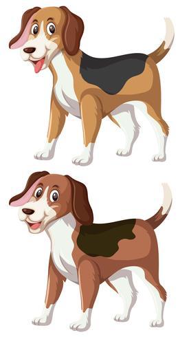 Eine Reihe von Happy Beagle