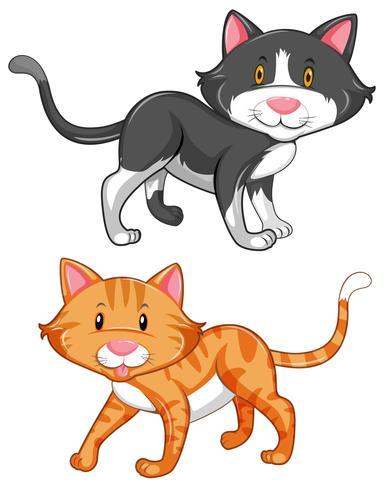 Zwei süße Katzen auf weißem Hintergrund