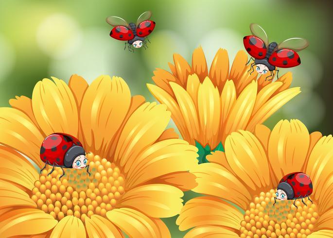 Ladybugs flying in the garden