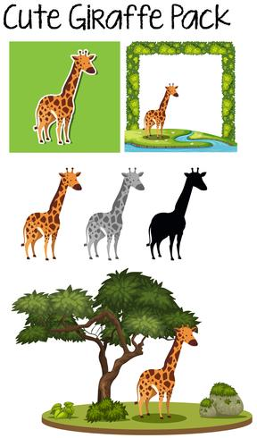A pack of cute giraffe