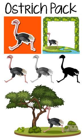 A pack of cute ostrich