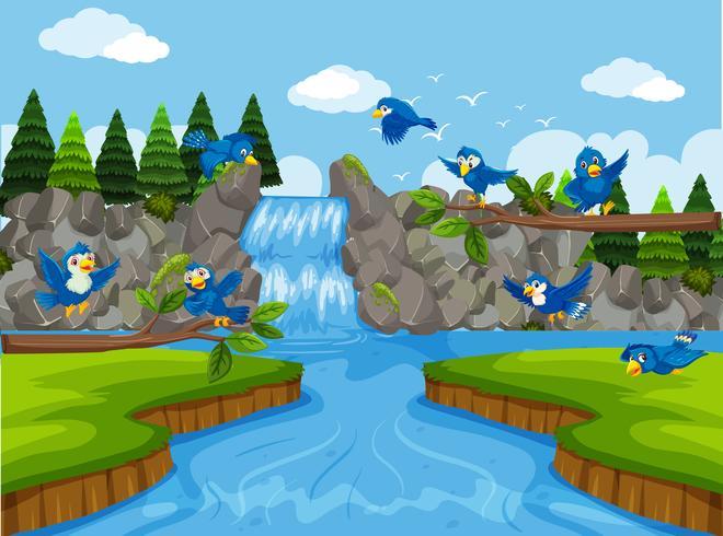 Pájaros azules en escena cascada