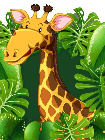 Giraff i skogen