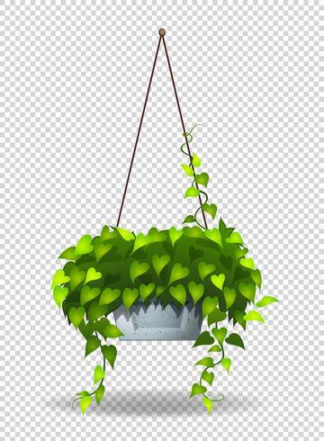 Planta em vaso pendurado na parede vetor