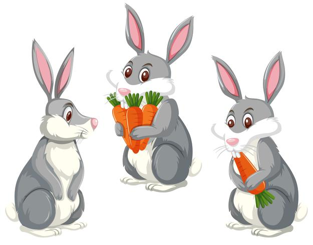 Set of three cute rabbits