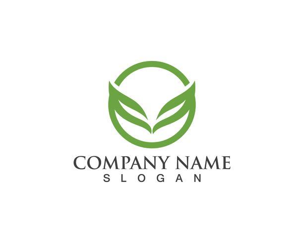 Icone del modello di vettore di logo e simboli foglia verde