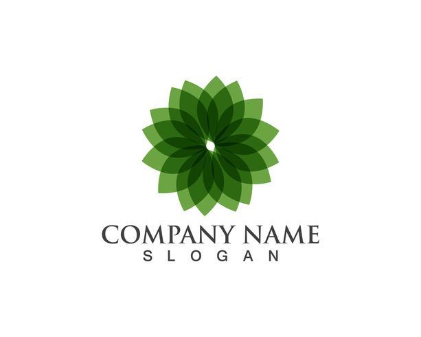 Logo de la feuille verte et symboles vectoriels modèles d'icônes