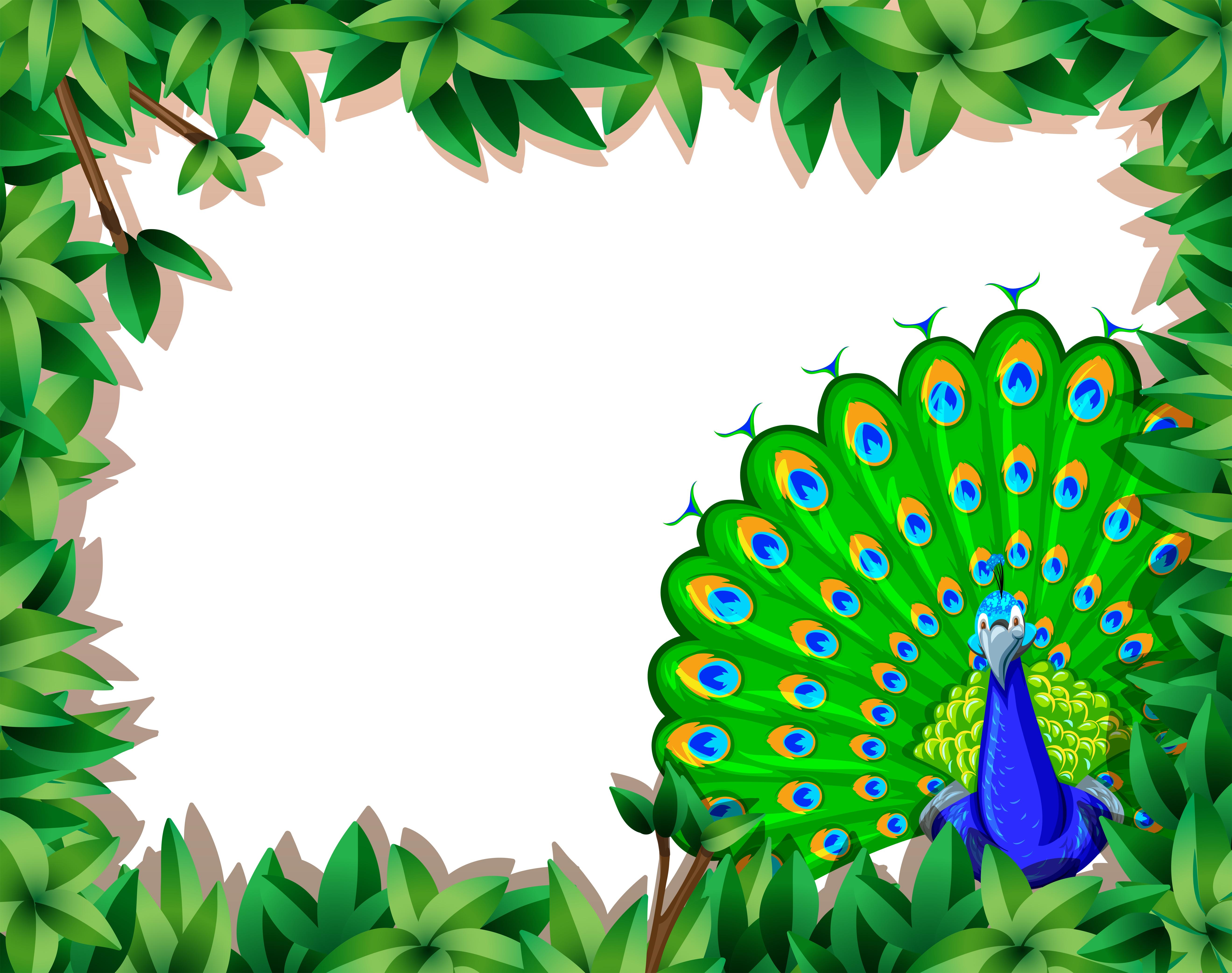 peacock borders free vector art