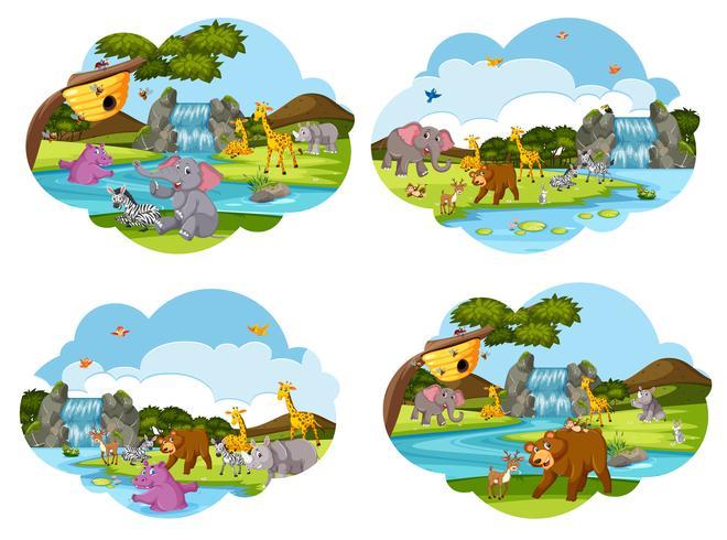 Conjunto de escenas de animales