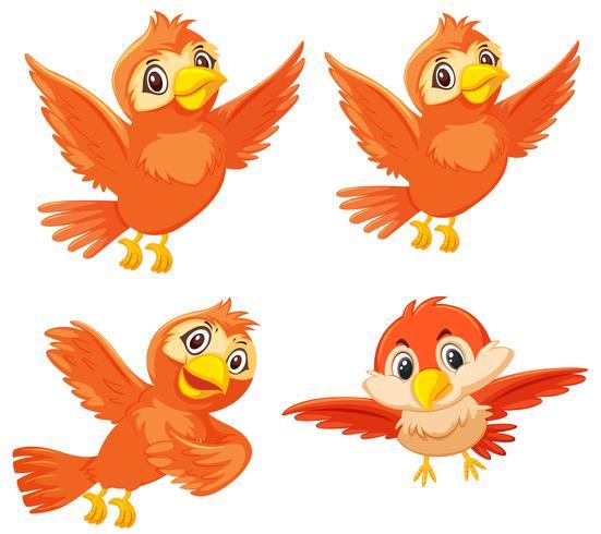 Ensemble de jolis oiseaux orange