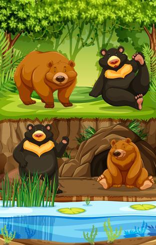 Bears in nature scene