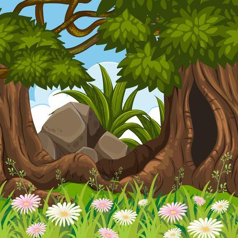 Escena del paisaje forestal