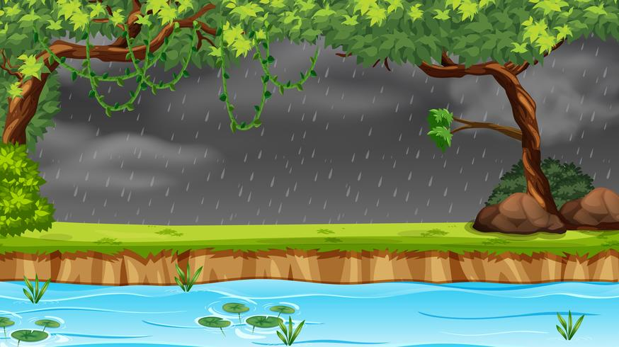 Regent in het bos