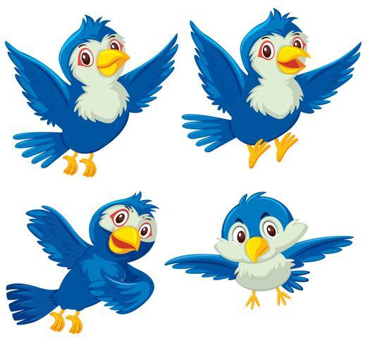Set di quattro uccelli blu