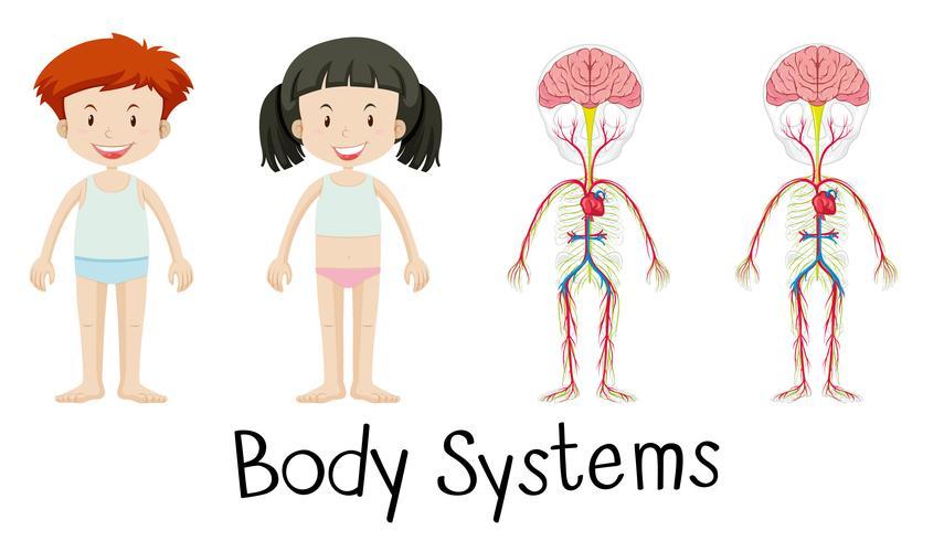 Sistemas corporales de niño y niña.