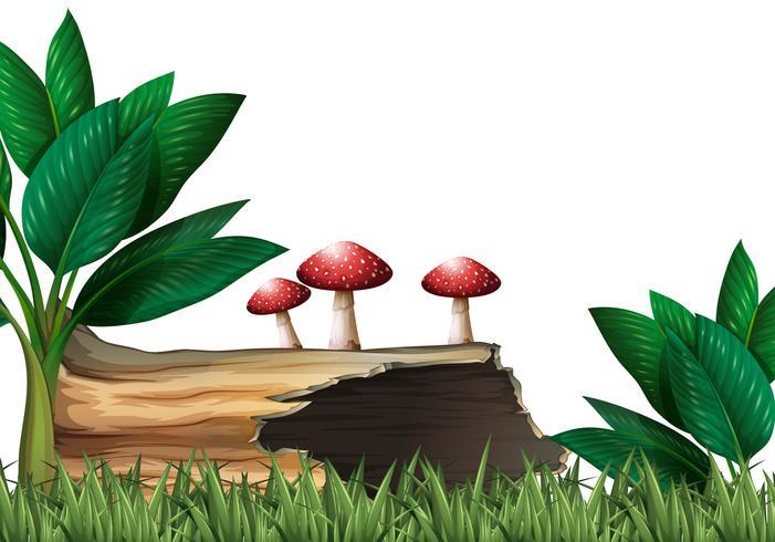Trädgård med logg och svamp
