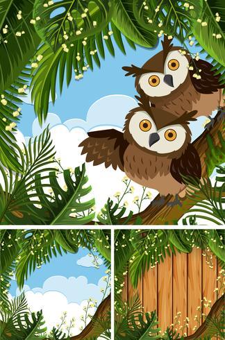 Trois scènes avec des hiboux dans les bois