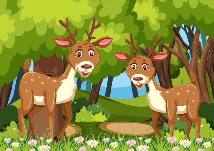 Dos ciervos en escena de maderas