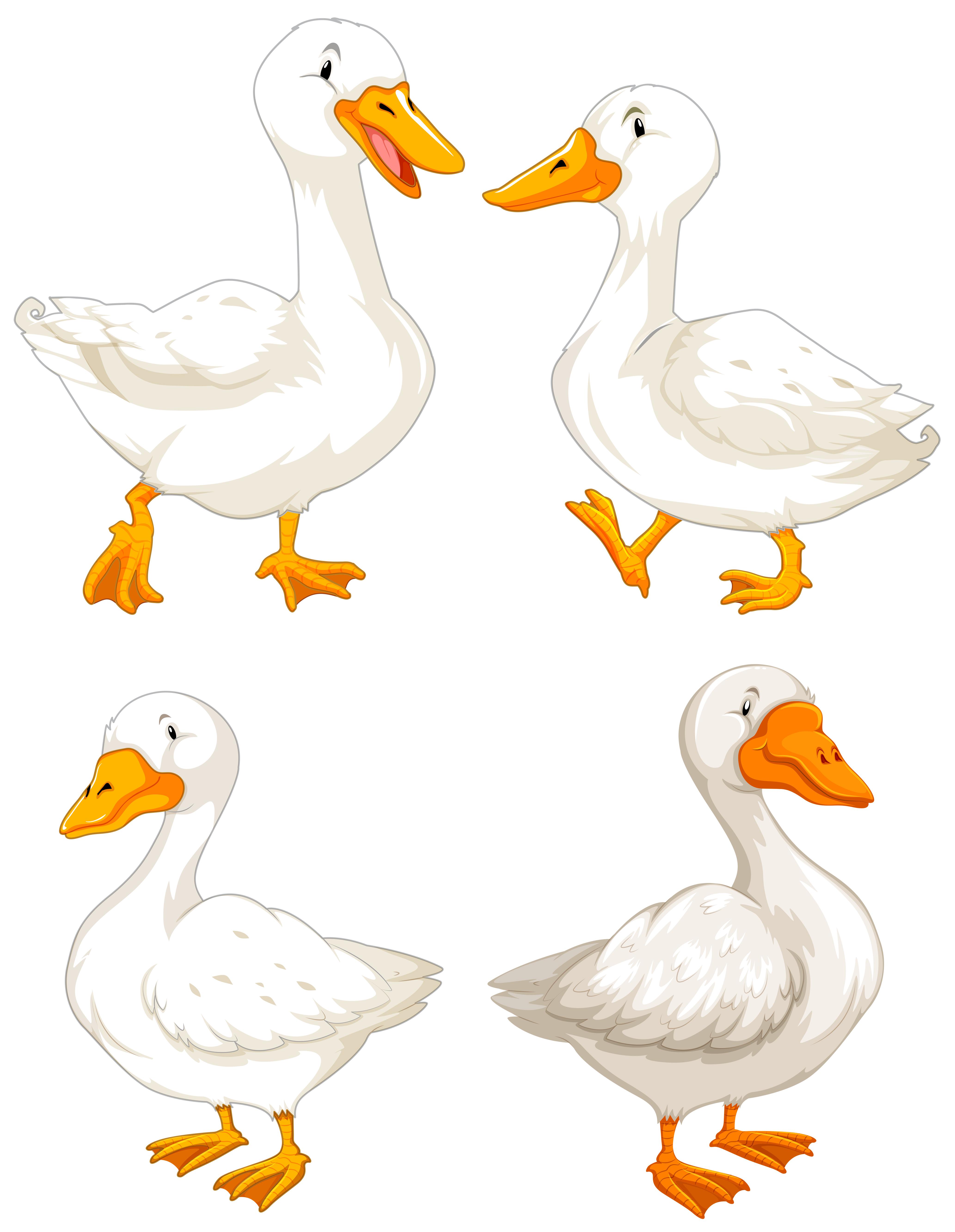 duck feet free vector art 9 free downloads vecteezy