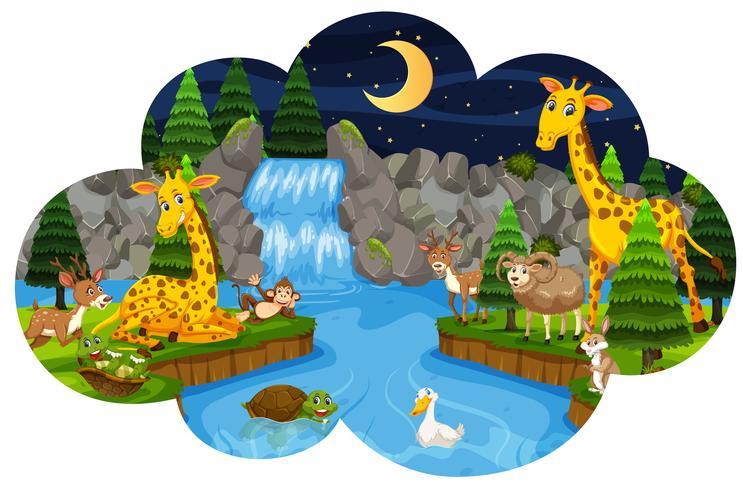Animales salvajes en el bosque por la noche