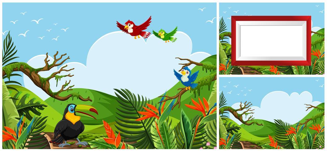 Set van vogels in de natuur