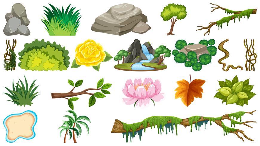 Set di oggetti naturali