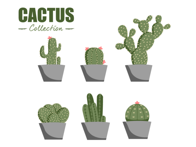 flat cactus collection vector element