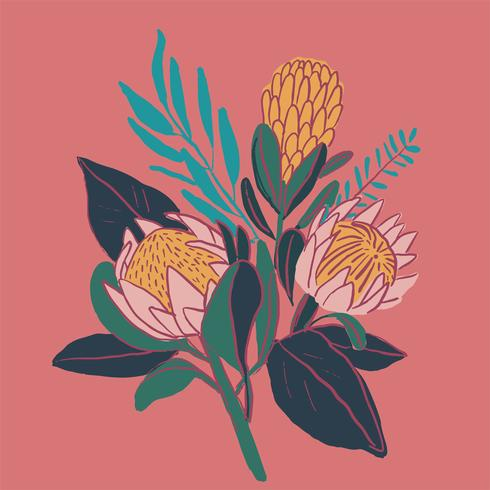 Kung Protea handritad med skiss grafisk design vektor
